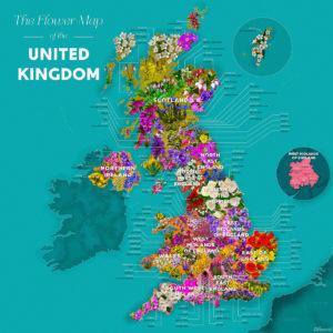 Support Wildlife: flower-map-of-the-uk