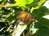 Saving Rare Butterflies in Brighton & Hove🦋With Help From Sussex Wildlife Trust & Scottish Power