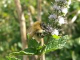 Sussex Bees & Allies🐝You Should Care About This Year